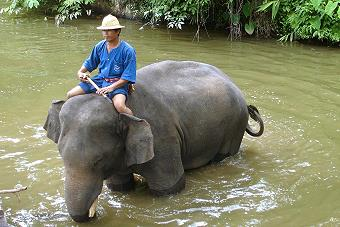 Thai Elephant Conservation Center Lampang