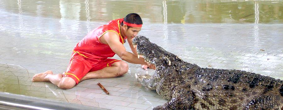 Crocodil Show Pattaya